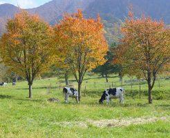 短期で稼げる仕事を探して長野県小渕沢町の牧場でリゾートバイト
