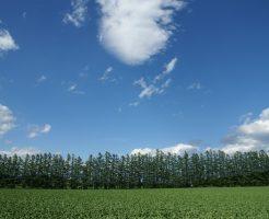求人サイトのリゾートバイト特集から北海道十勝地方にある農家でアルバイト