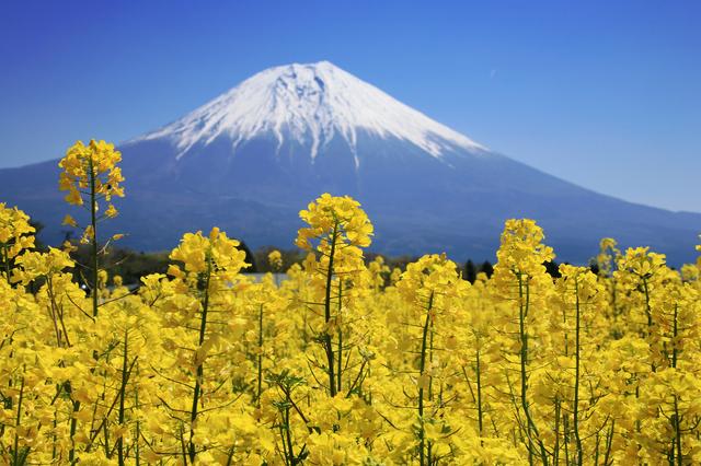 求人サイトから応募した富士宮市朝霧高原のフードパーク内の長期リゾートバイト