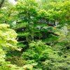【体験談】派遣として神奈川県箱根町のホテルで短期の住み込みリゾートバイト